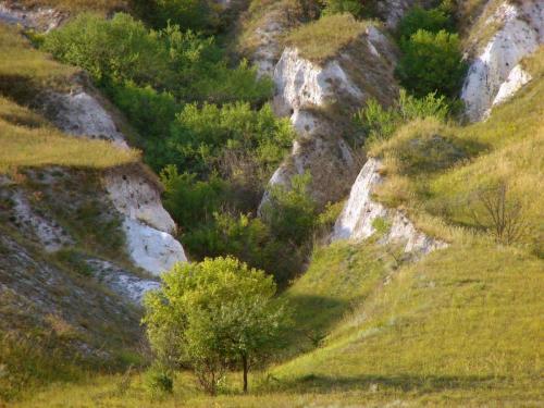 Chalk ravines. Kharkiv region